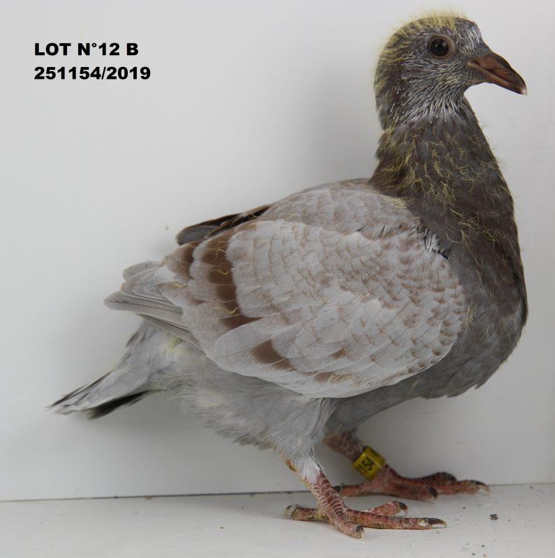 251154 LOT 12 B