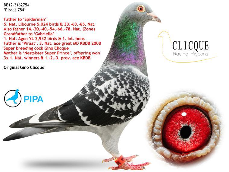 BE12-3162754_2 Gino Clicque Piraat 754