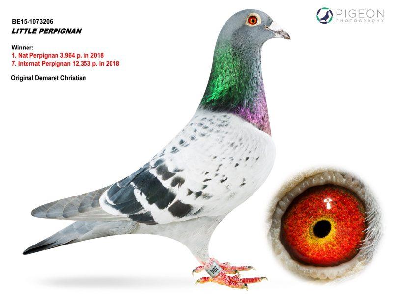 BE15-1073206 Little Perpignan Demaret