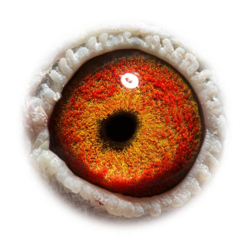 BE17-4061305_eye