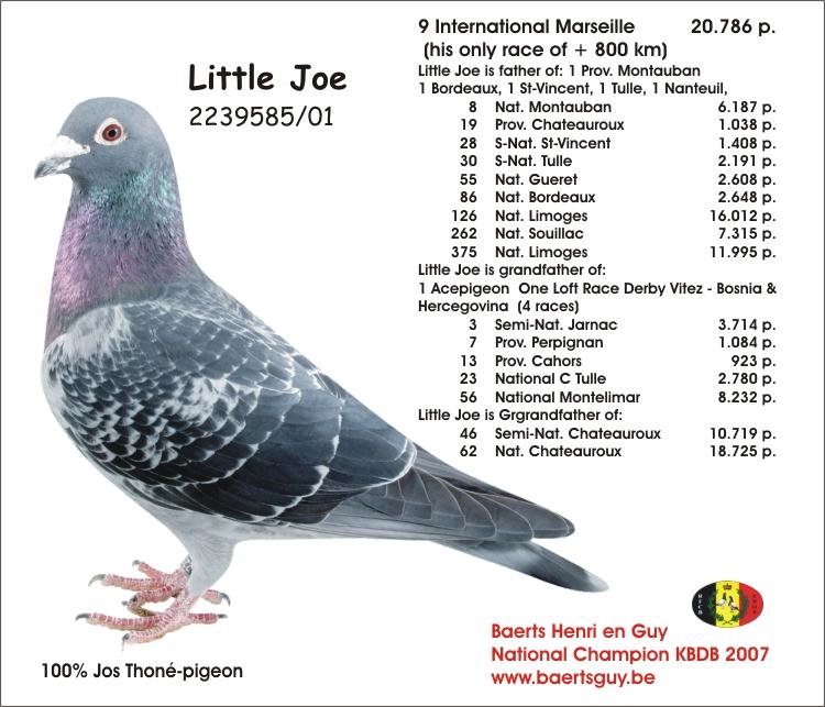 Baerts Little Joe 01-2239585
