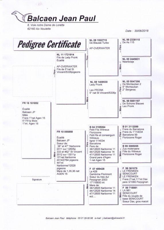 Balcaen Pedigree Agen 2