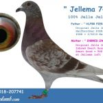 FR 2018-207741 : Jellema 741 – 100% Jelle Jellema