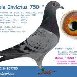 FR 2018-207750 : Double Invictus 750 – Inbred Invictus Best European Extreme Long Distance 2015