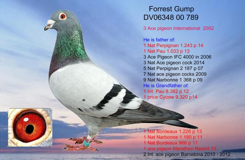 FREIALDENHOFEN Forrest Gump dv0634800789gr14