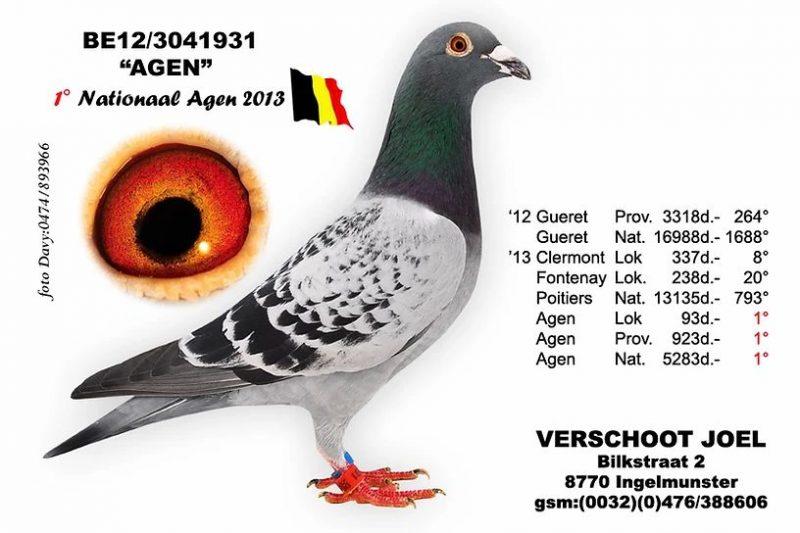 Joel Verschoot Agen