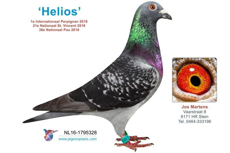 Jos Martens Helios NL16-1795328