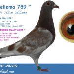 FR 2018-207789 : Jellema 789 – 100% Jelle Jellema