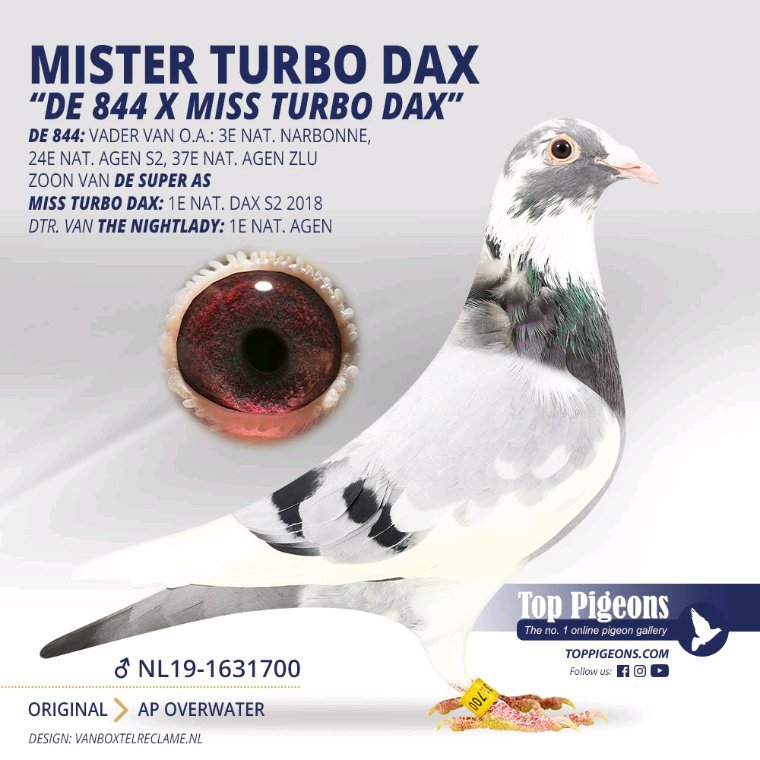 Mister Turbo