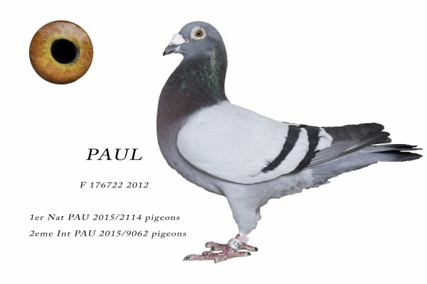 PAUL 1er Nat PAU 15