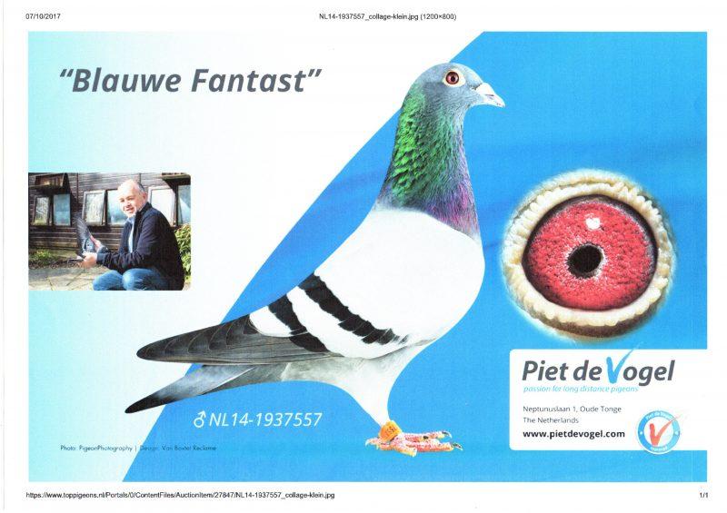 Piet de Vogel 3