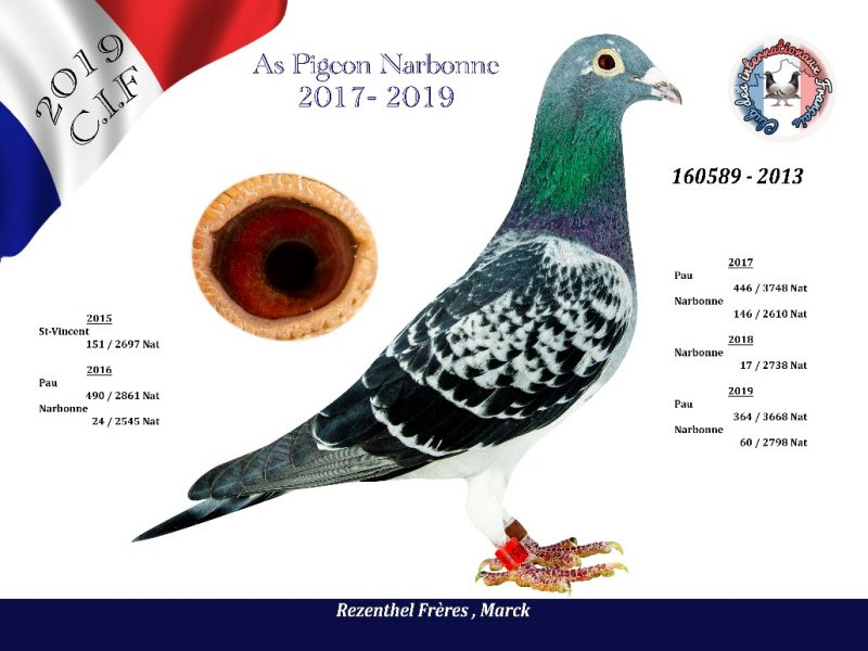 REZENTHEL AS Pigeon Narbonne