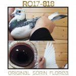 RO 17 : 020818 Femelle Petite Fille de Eurodiamond