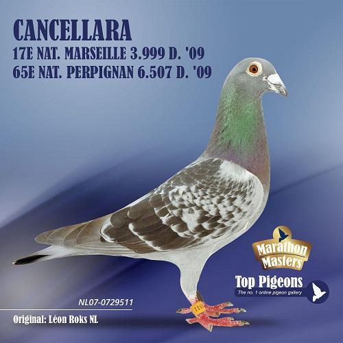 Roks Leon Cancellara