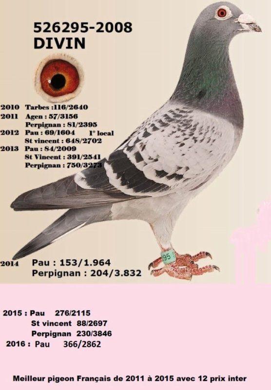 alain et valerie Pocholle - Morbecque - 526295-2008 Divin