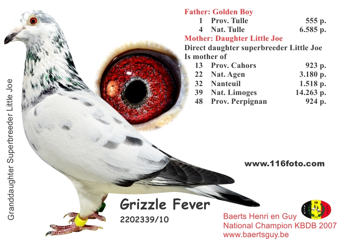 baerts grizzle Fever 10-2202339