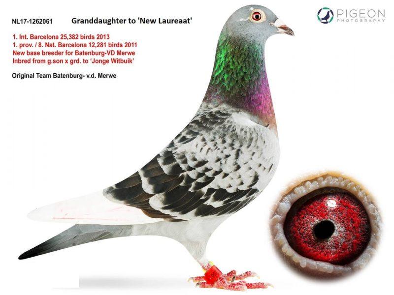 nl17-1262061_orig Grandaughter New Laureaat