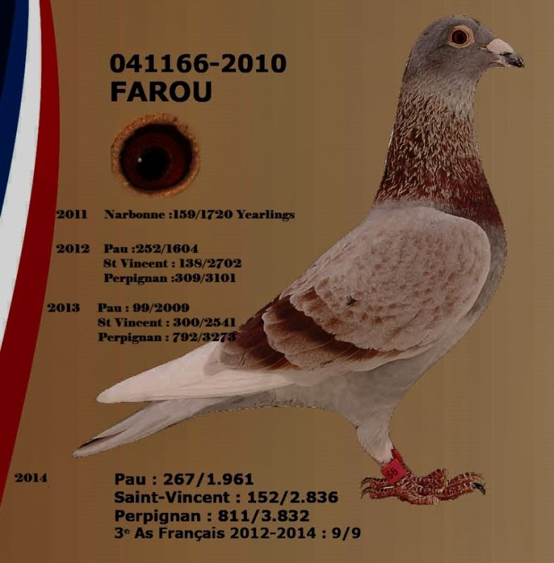 pocholle Farou