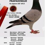 Alain & Valérie Pocholle de Morbecque (59) : Frapadingue : Meilleur pigeon internationaux 2012 – 2016