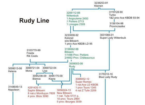 rudy line