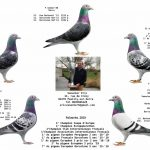 Eric Vanacker (02 – Pouilly sur Serre) – 1er Issoudun Groupement de l'Aisne contre 3600 pigeons