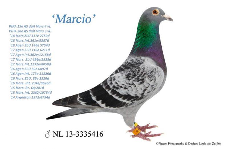 vangeel_marcio