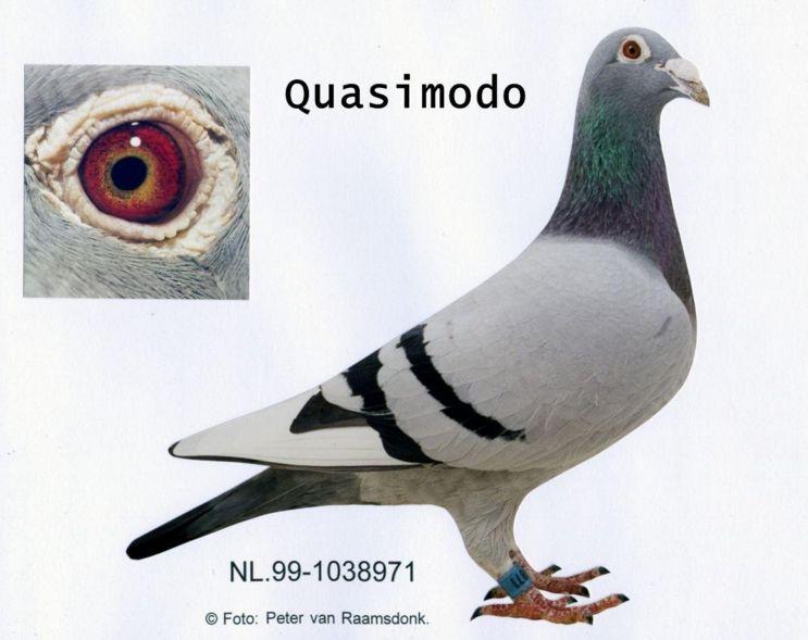 vangeel_quasimodo