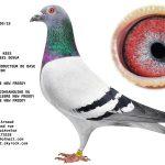 FR19-228709  BOSUA KEES/DE RAUW SABLON