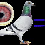 2016-232189 Consanguin ULTRA x DIOR
