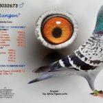 BE-2018- 5032673  100% Gaby VANDENABEELE