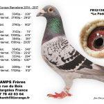N° 11 : 2012-139952 Mâle – Le Pédé