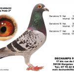 N° 6 : 2012-490432 Mâle – Le Pédé 2