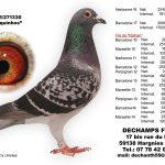 N° 10 : 2015-271330 Mâle – Marquinhos