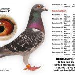 N° 12 : 2014-260809 Mâle – Matthysco2