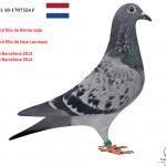 1.06 : NL 2018-1787556 : Petite-Fille KLEINE JADE Jelle Jellema