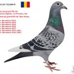 "1.08 : RO 2020-732480 : ""Sumerian Fighter"" –  ""Jan Barcelona"" – ""La Primera"" –  ""New Remy"" – ""New Laureaat"" – ""Special One"""