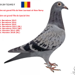 """1.04 : RO 2020-732492 : 3 X New Laureaat – 1 X """"New Wittenbuik"""" – 1 X """"Special One """" – 1 X  """"Kleine Jade"""" – 1 x """"New Remy"""""""