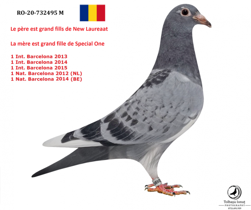 RO 20-732495 M