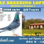 AT Breeding Loft (Belgique) : Vente de 52 Pigeons 2019 & 2020