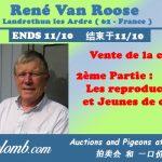 Vente : René VAN ROOSE de Landrethun les Ardres : Partie 2 – Reproducteurs + Jeunes des reproducteurs 2020