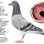 1.03 : FR2020-19392 : Origines THE Crow Jos Thoné x Van Uytterhoeven x André Roodhooft