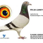 FR2020-134974 : Lignée Euro Diamond – Spécial One – New Laureaat