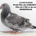 1.10 : FR2020-121875 : Petite-Fils GADGET