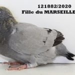 1.05 : FR2020-121882 : Fille MARSEILLE