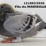 1.06 : FR2020-121883 : Fils MARSEILLE