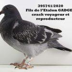 1.25 : FR2020-395741 : Fils GADGET